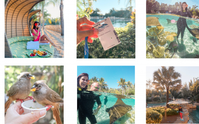 FIVE REASONS WHY YOU SHOULD VISIT DISCOVERY COVE